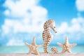 Seahorse with white starfish on white sand beach, ocean, sky an Royalty Free Stock Photo