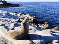 Seal on beach at La Jolla, San Diego California USA Royalty Free Stock Photo