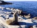 Seal on beach at La Jolla, San Diego California USA Royalty Free Stock Photo