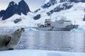 Seal in front of ship, boat, Antarctic Peninsula Royalty Free Stock Photo