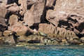 Seal sea lion in baja california relaxing on the rocks Royalty Free Stock Image
