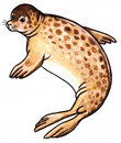 Seal Wild Animal