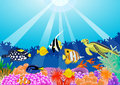 Sealife Royalty Free Stock Images