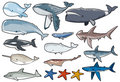 Sealife Collection 1 Royalty Free Stock Photo