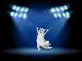 A sealion at the stage with spotlights illustration of Stock Photography