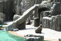 Seals on ground around slide to water pool Royalty Free Stock Images