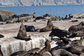 Seals in Hout Bay Cape Town Royalty Free Stock Photo