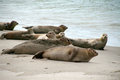 Seals lying on the beach of helgoland Stock Photography