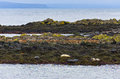 Seals resting on a rocks at the coast of fjord Royalty Free Stock Photo