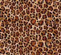 Seamless abstract pattern on a skin leopard texture, snake.
