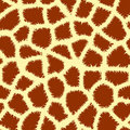 Seamless animal print Stock Image