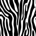 Seamless animal print Stock Photo
