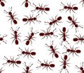 Seamless Ants Stock Photo