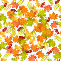 Seamless Autumn Leaf Fall Pattern Royalty Free Stock Photo