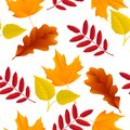 Seamless autumn leaves pattern oak maple ash birch vector illustration Royalty Free Stock Images