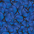Seamless background from blue morpho Royalty Free Stock Photo