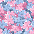 Seamless background with blue and pink flowers plumbago Royalty Free Stock Photography