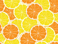Seamless background of citrus  slices. Royalty Free Stock Photo