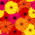Seamless background with colored gerbera. Royalty Free Stock Images
