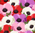 Seamless background with colored poppies. Royalty Free Stock Image