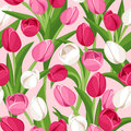 Seamless background with colored tulips red pink and white and green leaves on pink Stock Images