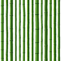 Seamless background of green bamboo forest. Royalty Free Stock Photo