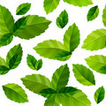 Seamless background mint leaves Royalty Free Stock Image