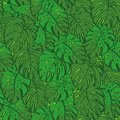 Seamless background monstera green leaves pattern of plant vector Royalty Free Stock Photo