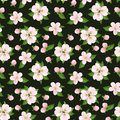 Seamless background with pink apple flowers vecto vector pattern and green leaves on a dark green Royalty Free Stock Images