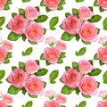 Seamless background with Pink roses. Isolated on white backgroun Royalty Free Stock Photo