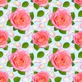Seamless background with Pink roses and petals. Royalty Free Stock Photo