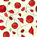Seamless background of poppys Royalty Free Stock Photo