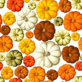 Seamless background with pumpkins various Royalty Free Stock Photography