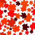 Seamless background with red maple leaves. Royalty Free Stock Photo