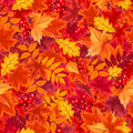Seamless background with red and orange autumn leaves. Vector illustration.
