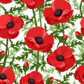 Seamless background with red poppies. Royalty Free Stock Image