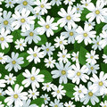 Seamless background with stellaria flowers. Stock Image