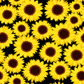 Seamless background with sunflowers. Royalty Free Stock Photo