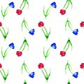 Seamless background with tulips. Watercolor background with red and blue tulips on white background.Hand drawn red tulip flowers. Royalty Free Stock Photo