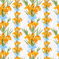 Seamless backround from yellow crocuses spring Stock Photography