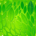 Seamless beautiful green leaves background vector with water drops illustration Stock Images