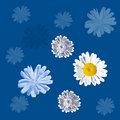 Seamless blue pattern with daisies and chicory Royalty Free Stock Photo
