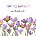 Seamless border of spring primroses on white background