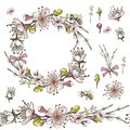 Seamless brush, wreath of apricot flowers in on white background