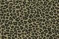 Seamless camouflage pattern leopard. Khaki green texture, vector illustration.