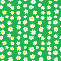 Seamless Daisies Pattern Royalty Free Stock Photo