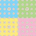 Seamless Daisy Pattern Stock Photos