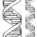 Seamless DNA double helix sketch Royalty Free Stock Photo