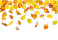 Seamless falling autumn leaves pattern of down on white background Royalty Free Stock Photography