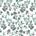 Seamless floral pattern, Blossoming oregano flowers vector doodle sketch hand drawn healing herb isolated on white